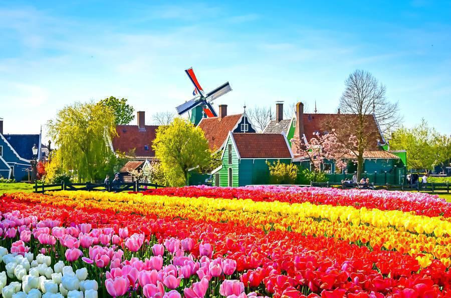 Olanda a partire da € 8.700